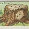 How to kill a tree stump.