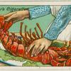 How to judge freshness of a lobster.