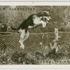 Hound taking a fence.  New Forest foxhounds at Helmsley Station.