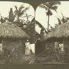 Native Jamaican Thatched Hut among the Cocoanut Palms and Banana Trees.