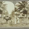 A typical scene in Port Antonio, Jamaica.