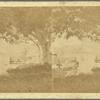Views in the Danish Church Yard, Fredericksted, St. Croix, W. I.