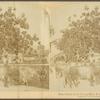 East Indian Cattle farm of Hon. Evelyn Ellis, Montpelier, W.I.