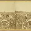 Picking cotton. [October.]