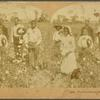 Pickers Grouped in Cotton Field.