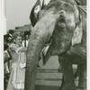 Amusements - Shows and Attractions - Frank Buck's Jungleland - Elephants - Woman in costume feeding
