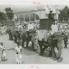 Amusements - Shows and Attractions - Frank Buck's Jungleland - Elephants - Frank Buck riding in procession