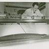 Amusements - Electric eel