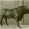 Art - Sculpture - Bull