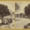 Crokus Tree, Antigua.