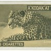 Leopardess.