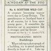 Scottish Wild Cat.
