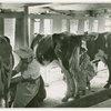 Borden - Cows - Milking - Women milking cows