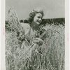 Continental Baking Co. - Harvest Queen with wheat