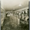 Electric Utilities - Electrified Farm - Cows in barn