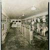 Electric Utilities - Electrified Farm - Cows in barn