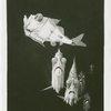 New York Zoological Society - Silver hatchetfish