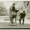 New York Zoological Society - Weighing Pandora the baby panda