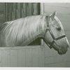 Queens County Horse Show - Horse