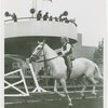 Queens County Horse Show - Girl riding horse