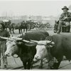 Railroads on Parade - Scene with cattle and carriage
