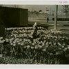 Special Weeks - Tulip Week - Woman in tulip bed