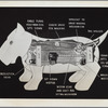 Westinghouse - Mechanical Man and Dog (Elektro and Sparko) - Diagram of Sparko