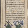 Iris (Iris germanica), iyyarsâ, fol. 20