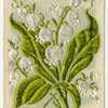 Lily-of-the-valley (Sweetnes; Purity.)