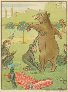 [Bear gets measured.]