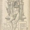 La dissection des parties du corps humain diuisee en trois liures.