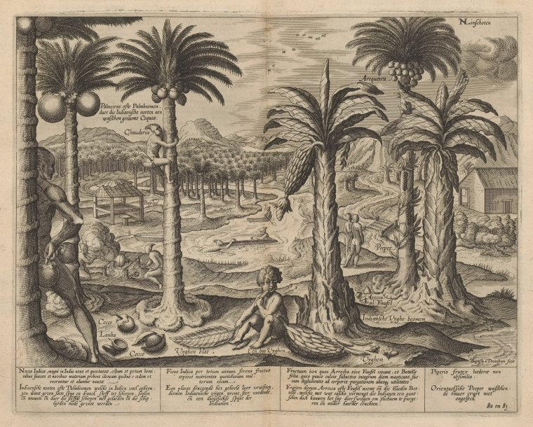 Fascinating Historical Picture of Baptista Duetecum in 1596