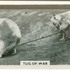 Tug-of-war.