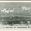 A meeting at Whipsnade.