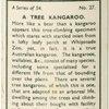 A tree kangaroo.
