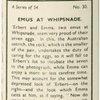 Emus at Whipsnade.