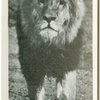"""""""Prince"""" of Whipsnade."""