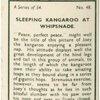 Sleeping kangaroo at Whipsnade.