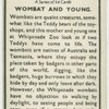 Wombat and young.