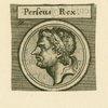 Perseus rex.