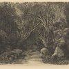Le ruisseau sous bois