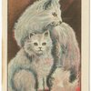 Blue Persian Cat wih Kitten.
