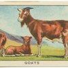 Goats.