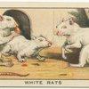 White Rats.