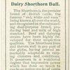 Dairy Shorthorn bull.