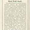 Red Poll bull.