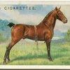 Hackney Pony stallion.