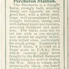 Percheron Stallion.