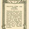 Malayan Tapier and Young.