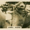 Camel Riding.